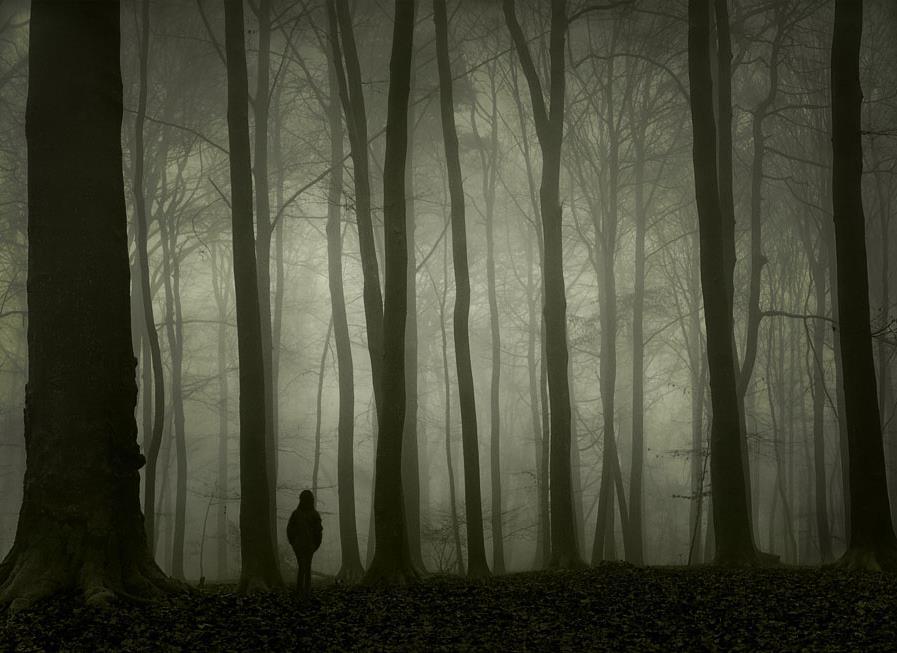 Lost in the Woods Lyrics